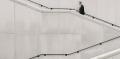 Capital-investissement : Cedrus et Equitis démocratisent l'accès au marché